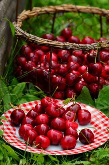 cherries-1503977_1920